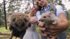 Two little happy hedgehogs in hands of bride and groom Stock Footage