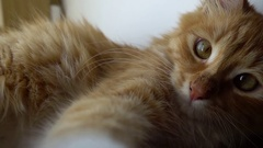 Close up of a funny young cat lying at the windsill and playing with camera Stock Footage