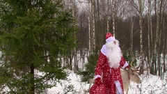 Santa Claus and reindeer walking in winter forest near pine tree Stock Footage