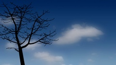 Bare tree silhouette against diffused clouds in a blue sky Stock Footage