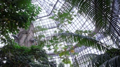 Inside Berlin botanical garden greenhouse, tropical plants grow, Germany Stock Footage