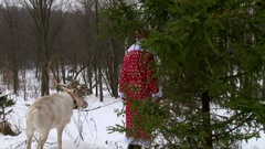 Santa Claus and reindeer comes from behind the pine tree Stock Footage