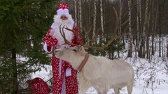 Reindeer with big antlers stand near the speaking Santa Claus in winter forest Stock Footage