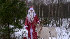 Reindeer with a Santa Claus in a winter forest near pine tree congrats kids Stock Footage