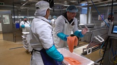 A workers puts salmon fillet on automatic feed for slicing fish. Dolly. Stock Footage