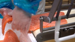 A worker puts salmon fillet on automatic feed for slicing fish. Close up. Stock Footage
