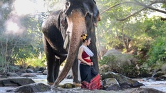 Asian woman with elephant in creek ,Chiang mai Thailand. Stock Footage