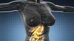 Loop science anatomy scan of human digestive system glowing  Stock Footage