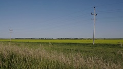 Telephone line between Wheat and yellow Canola fields with blue sky in Manitoba Stock Footage