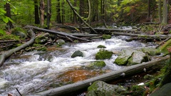 Wild nature. Mountain brook in a wild forest. Karkonoski National Park, Poland Stock Footage