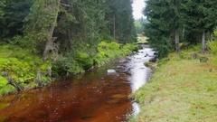 Wild nature. Mountain river in a wild forest. Karkonoski National Park, Poland Stock Footage