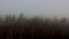 Morning, fog over spring forest Stock Footage