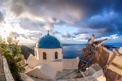 Santorini island with donkey in Oia village, Greece Stock Photos