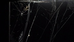 Spider weaving web under Streetlight on rainy night  HD Timelapse sequence Stock Footage