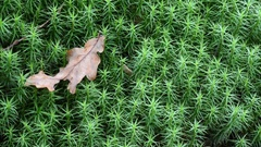 Moss and leaves in the wood Stock Footage