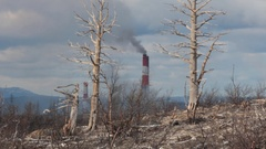 Withered trees on backdrop of steaming pipes Stock Footage