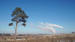 Thermal power plant or a factory with Smoking chimneys and a solitary tree Stock Footage