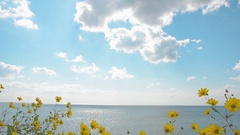 Horizon of sea and cloudy sky, flowers in foreground Stock Footage
