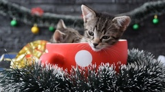 Kittens in the holiday decoration Stock Footage
