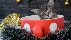 Sleepy kitty sink into a cup  surrounded with contestation decoration Stock Footage
