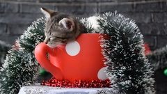 Rotating the cup with sleepy kittens in the holiday decoration Stock Footage