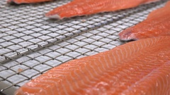 Workers put the pieces of salmon fillet on a table for salting. Close up. Stock Footage