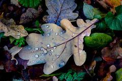 Wet autumn leafage Stock Photos