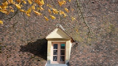Horse-chestnut tree beside a house Stock Footage
