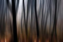 Abstract motion blur of trees in a forest Stock Illustration