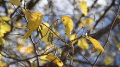 Hazel branches Stock Footage