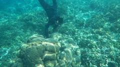 People snorkeling in sea, super slow motion 120fps Stock Footage