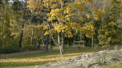 Trees are gold and green in autumn Stock Footage