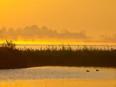Orange glow sunrise behind reed with ducks on foreground Stock Photos