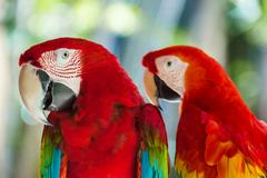 Parrots in Bali Island Indonesia Stock Photos