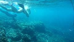 People snorkeling in sea Stock Footage