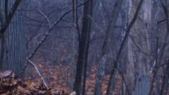 Eerie Woods 01 HQ Stock Footage