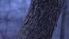Eerie Woods 02 HQ Stock Footage