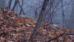 Eerie Woods 04 MP4 Stock Footage