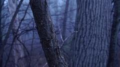 Eerie Woods 05 HQ Stock Footage