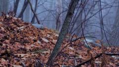 Eerie Woods 04 HQ Stock Footage