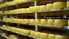 People Making Cheese In Factory Stock Footage