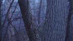Eerie Woods 05 MP4 Stock Footage
