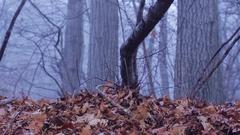 Eerie Woods 08 MP4 Stock Footage