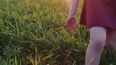 Legs of woman walking in field touching long grass with her hand. Young girl in Stock Footage
