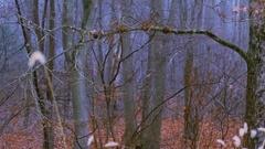 Eerie Woods 10 MP4 Stock Footage