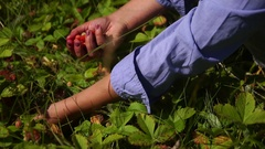 Picking berries in the woods in hand Stock Footage