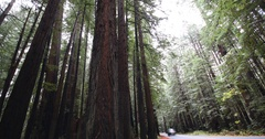 Avenue of the Giants from inside Burlington Campground Stock Footage