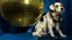 Dog disco puppy animal pet funny party music doggy Stock Footage