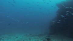 Divers swim underwater with aqualungs. Deepness. Colony of fish. Wild life Stock Footage