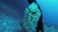 Divers swim underwater. Beautiful coral reef. Scubadiving. Sealife. Animals Stock Footage